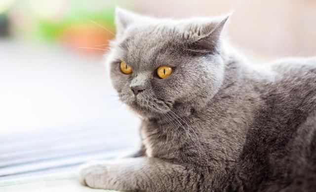Mačka in njeni uhlji