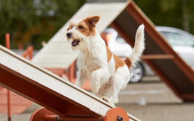 Agility trening za pse